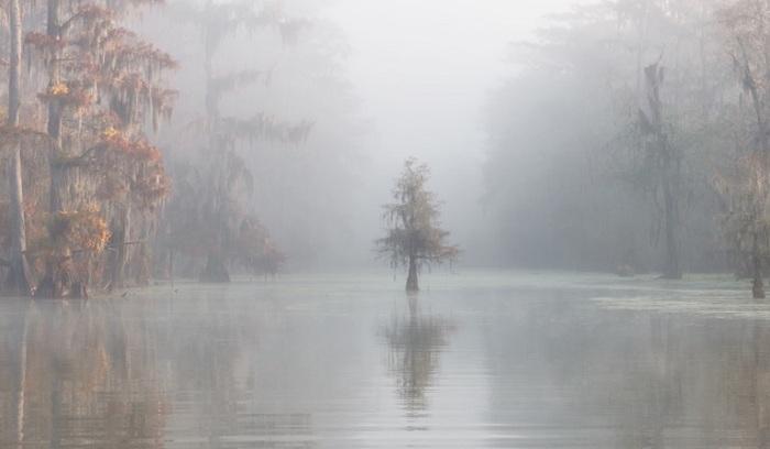 3-е место в категории «Премия Каролины Митчум» получил итальянский фотограф Роберто Марчегиани (Roberto Marchegiani) за снимок озера Мартин в Луизиане (США).