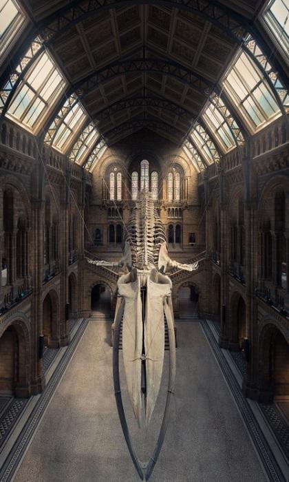 Спецпремию за лучшее вертикальное изображение получил фотограф Питер Ли (Peter Li) из Великобритании за снимок, сделанный в лондонском музее естественной истории.