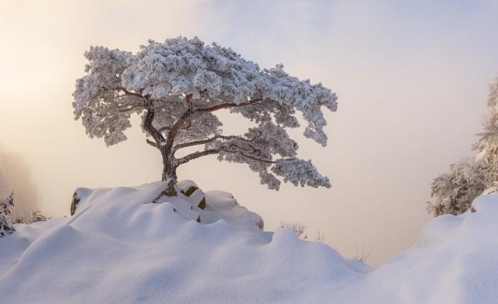 Лучшим в любительской категории стал фотограф Натаниэль Мерц (Nathaniel Merz) из Южной Кореи со снимком заснеженного дерева в парке Даэдунсан.