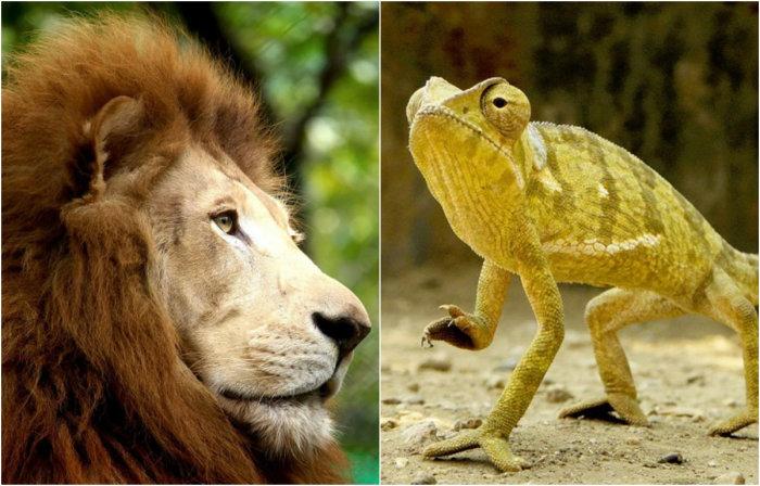 Финалисты конкурса World Wildlife Day.