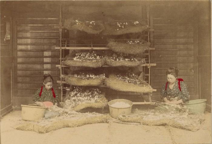 Процесс получения шелковичных коконов.