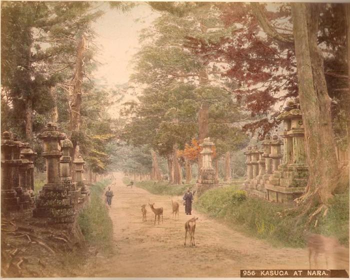 Синтоистское святилище в Наре.