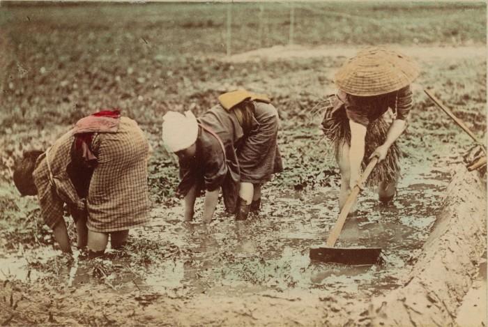 Женщины работают на поле.