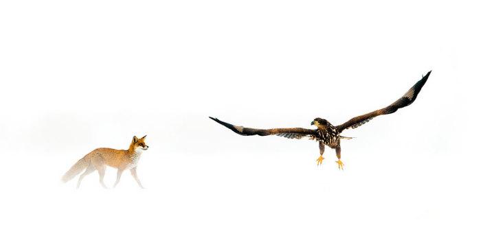 Категория «Взгляд на дикую природу», автор снимка - венгерский фотограф Бенс Мате (Bence Mаtе).