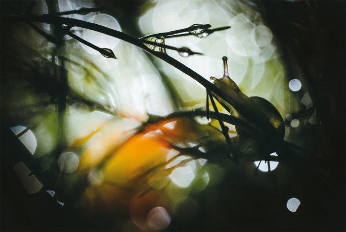 Категория «Маленький мир», автор снимка – фотограф Уильям Маллетт (William Mallett) из Великобритании.