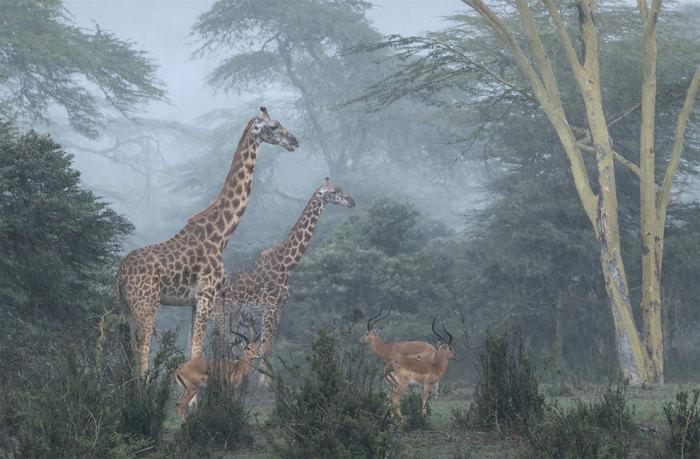Категория «Взгляд на дикую природу», автор снимка – фотограф Хосе Фрагозо (Josе Fragozo) из Португалии.