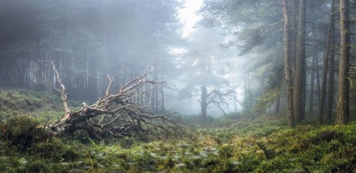 Категория «Свет на Земле», автор снимка – фотограф Симон Бакстер (Simon Baxter) из Великобритании.