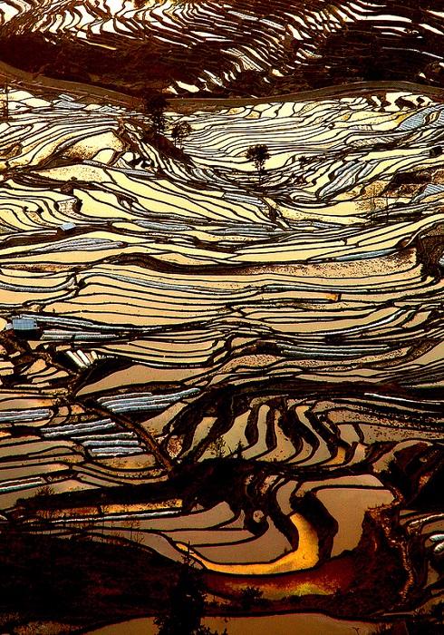 Рисовые террасы провинции Юньнань.