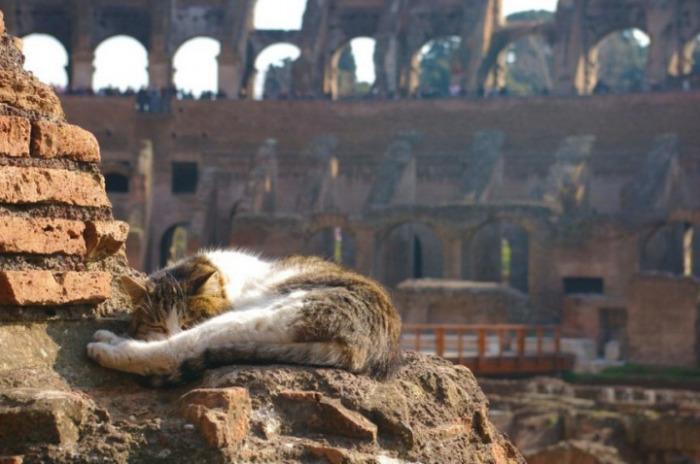 В Риме насчитывается более 120 тысяч диких кошек, которые избрали своим местом «царствования» древний Колизей.