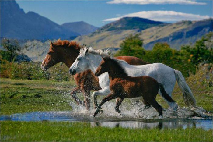 На небольшом острове живёт пять человек постоянного населения и более 400 диких лошадей.