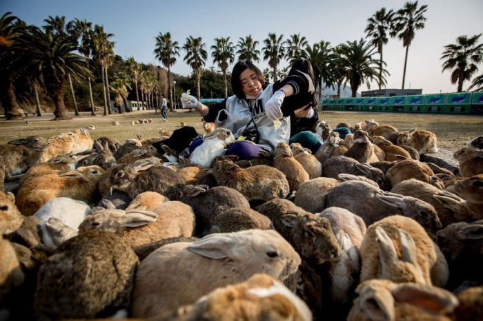 Кролики так расплодились, что их можно было встретить в любом уголке острова.