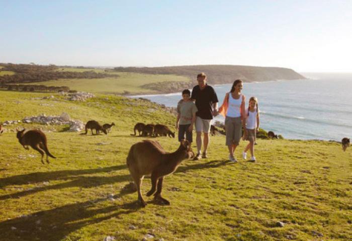На острове обитает множество видов сумчатых млекопитающих из семейства кенгуровых.