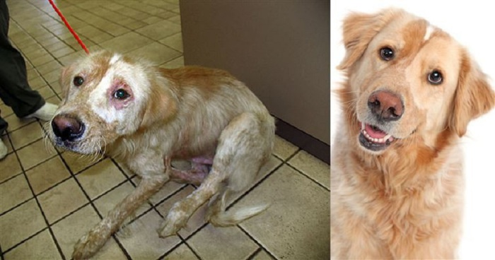 Никогда не поздно спасти жизнь и взять себе чудесную собаку из местного приюта.