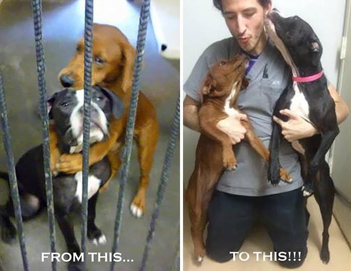 Помощь пришла в последний момент – прижавшихся друг к другу собак должны были усыпить...