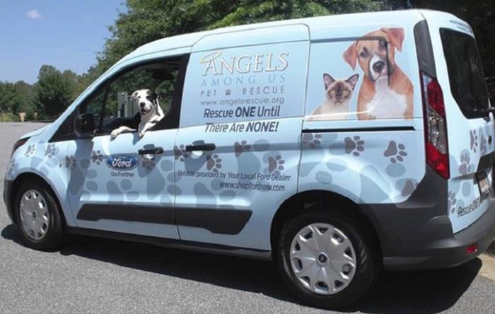 Спасение собак от жалкой жизни в приютах и усыпления.