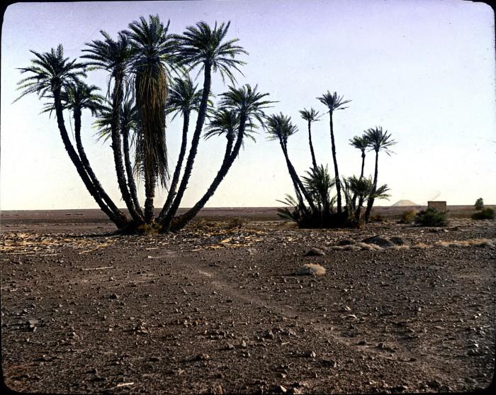 Пальмы в пустыне.