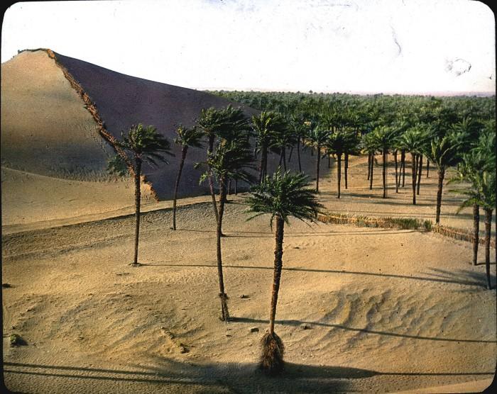 Пальмовая роща.