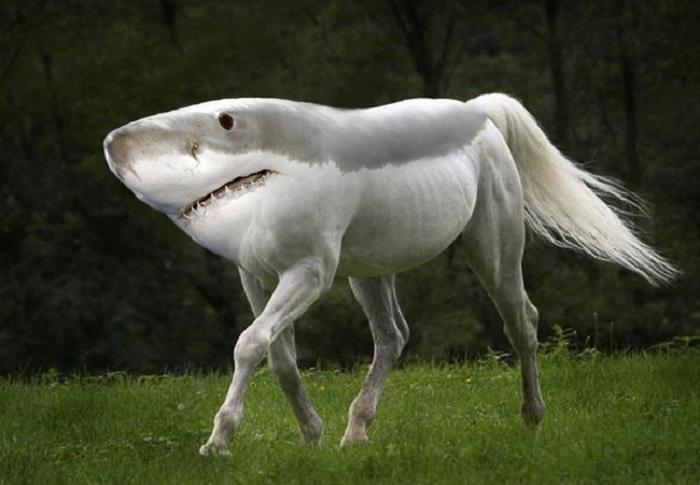 Удивительный симбиоз акулы и лошади.