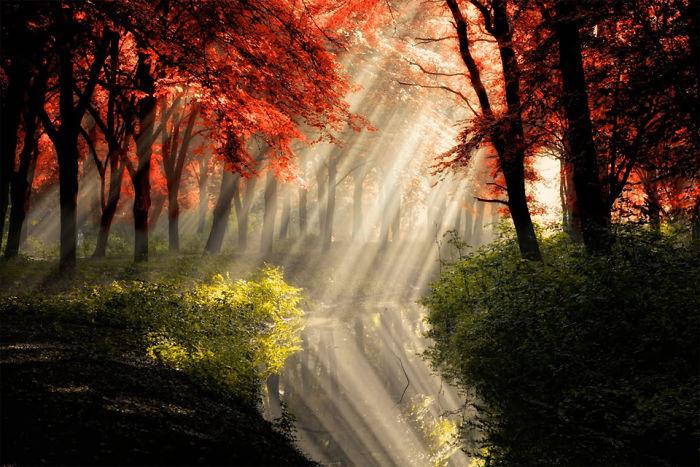 Солнечные лучи в осеннем лесу продолжаются в озере.
