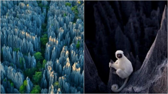 Лес карстовых пиков высотой до 50 метров, служит безопасным местом обитания уникальных в природе, белых лемуров.