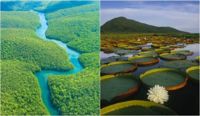 Амазонские джунгли расположены на обширной, почти плоской, равнине, охватывающей почти весь бассейн реки Амазонки.
