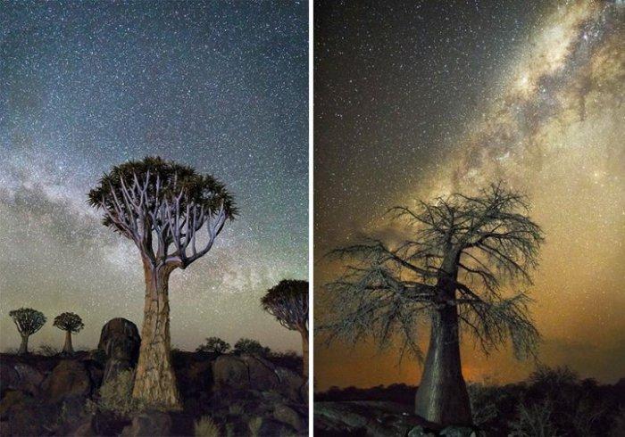 Почки деревьев меняют свои размеры и формы в зависимости от движения Луны и планет.