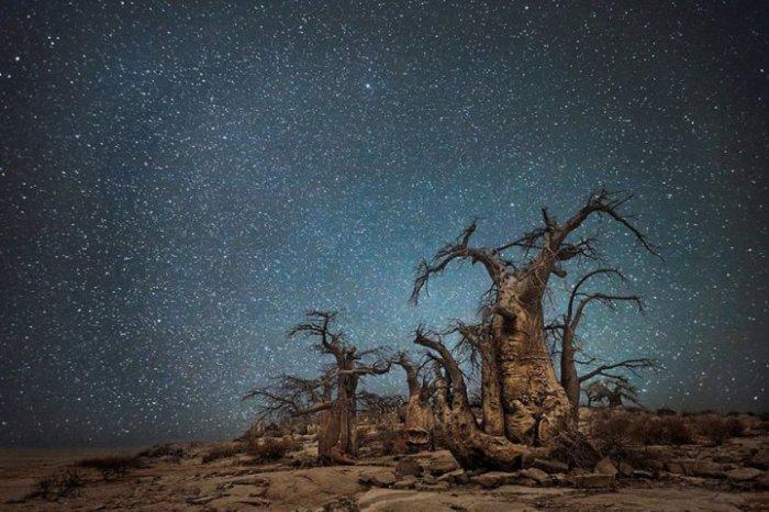 Старые деревья, утопающие в ночном пейзаже.