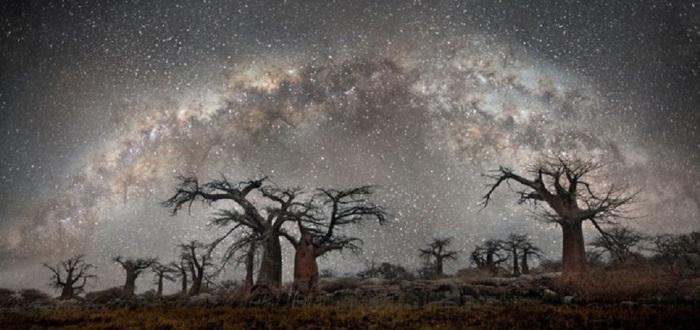 Красота самых старых деревьев планеты на фоне неба усыпанного звёздами.