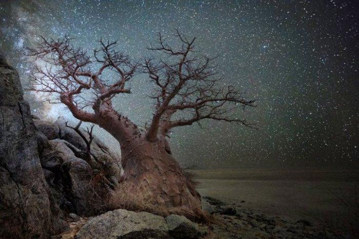 Ничто не может сравниться с красотой звёздного неба тёплой летней ночью.