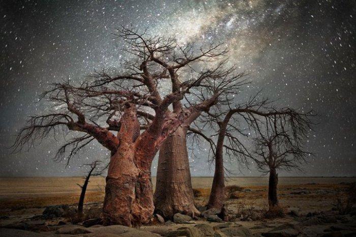 Красота деревьев освещённых небесными светилами