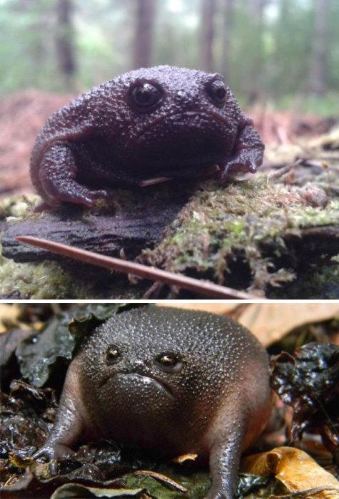 Погода такая, что грустят даже жабы.