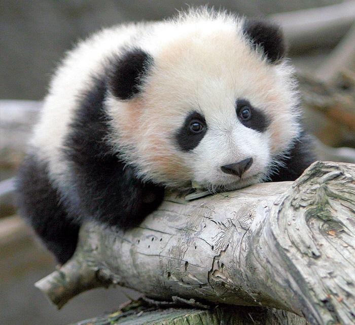 Самое милое животное во всём мире.