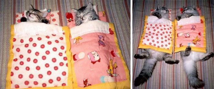 Пора бы нам новое одеяло пошить...
