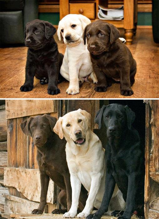 Вот как выглядит настоящая дружба между собаками.