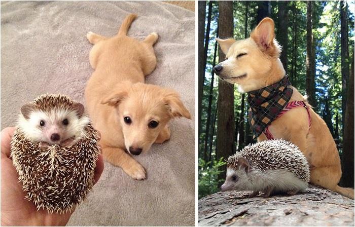 Животные, сфотографированные вместе — маленькие и большие.