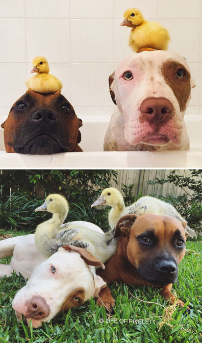 Растем и играем вместе.
