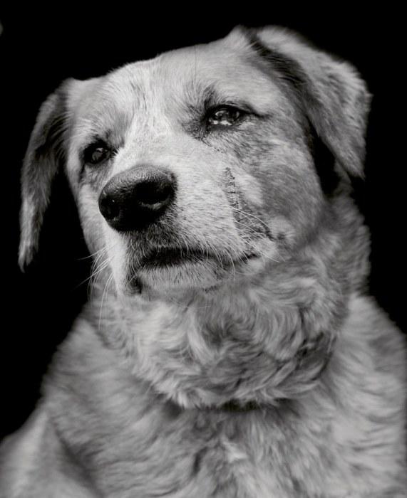 Модные фотографы уверены, что качественные снимки могут изменить жизнь животных из приюта.