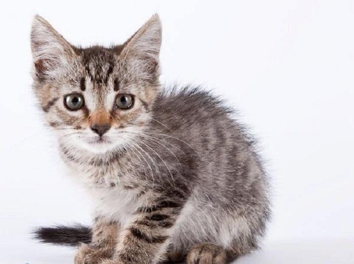 Невозможно равнодушно смотреть в эти грустные испуганные глаза на фотографии из серии «Коты из приюта».