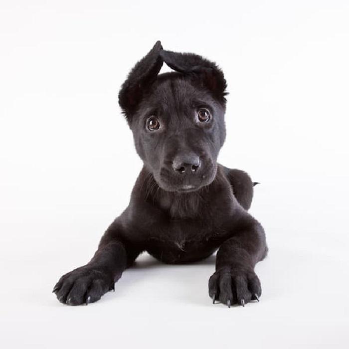 Забавный щенок с фотографии уже счастливо живет в своей новой семье.