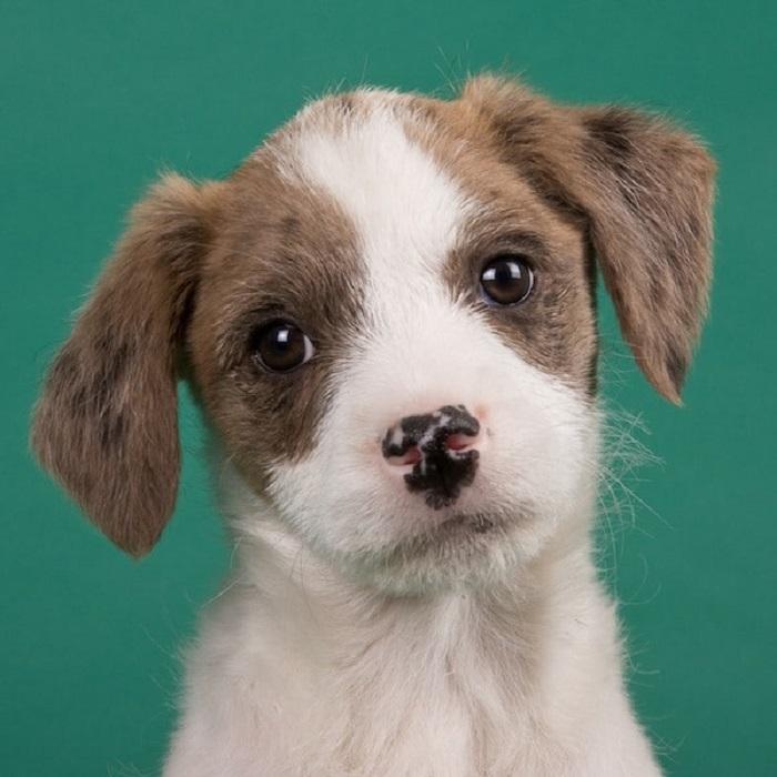 Взяв домой щенка из приюта можно вырастить преданного и ласкового компаньона.