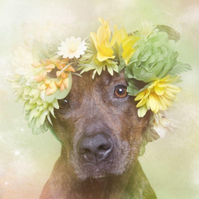 Фотограф Софи Граманд (Sophie Gamand) взялась за разрушение стереотипов, ассоциирующихся с собаками породы питбуль.