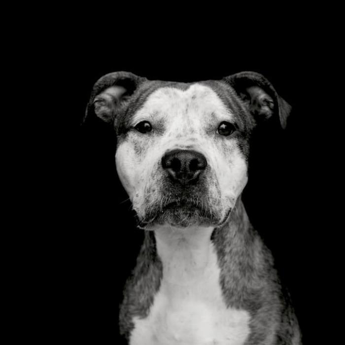 По мнению мастеров, одна проникновенная фотография может рассказать о брошенном животном больше, чем слова.