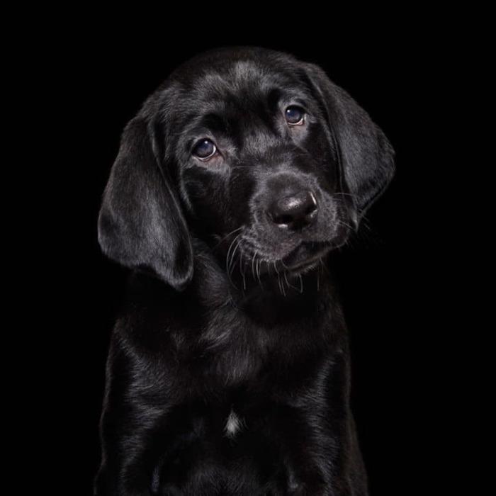Фотограф Шаина Фишман (Shaina Fishman) сконцентрировала свое внимание на черных собаках, содержащихся в приютах.