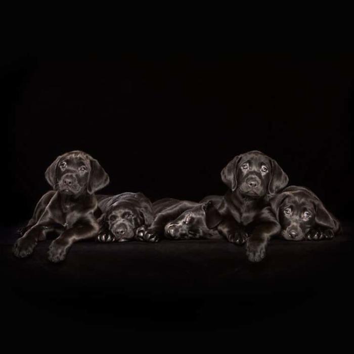 По мнению фотографа, именно черный фон помогает обратить внимание зрителя на блестящую шерсть и выразительные глаза бездомных собак.