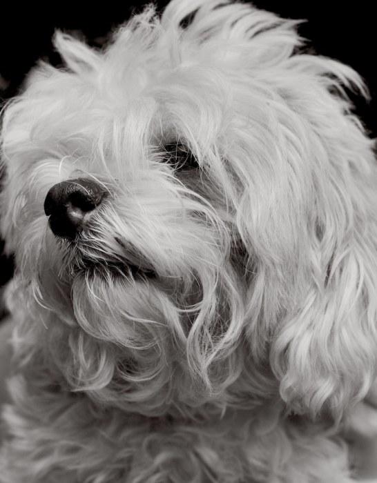 На портретных снимках, созданных именитыми фотографами, животные выглядят искренне и трогательно.