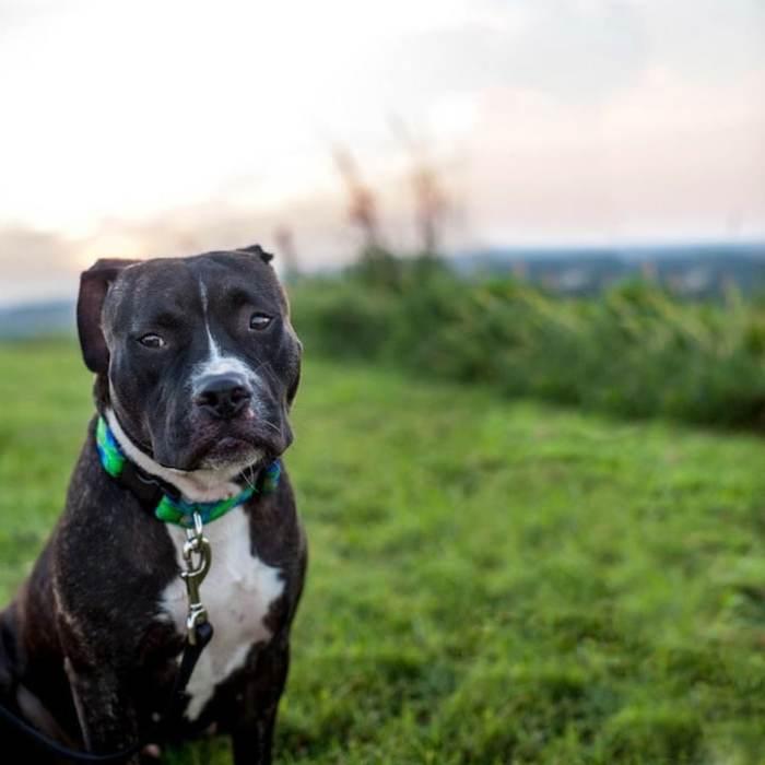 В серии «Собаки на свалках» фотографу удалось передать красоту и беззащитность брошенных животных.