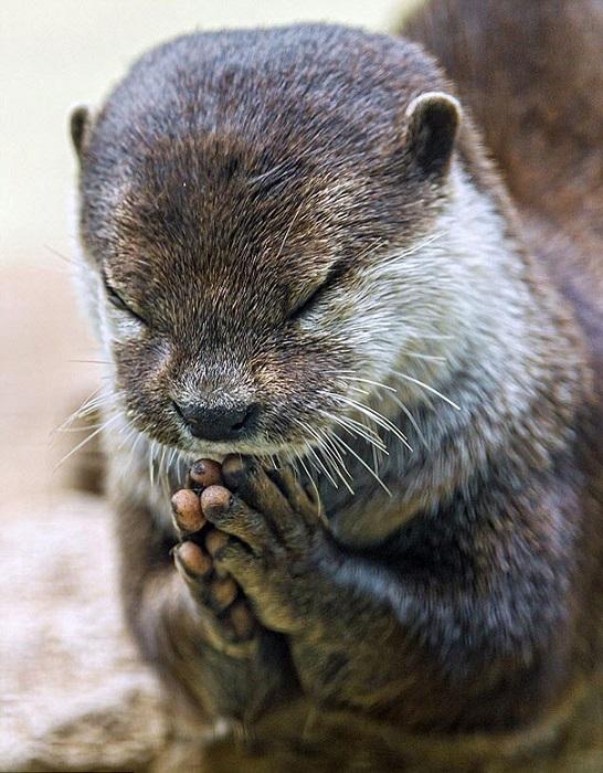 Молитвенная поза в исполнении зверька.