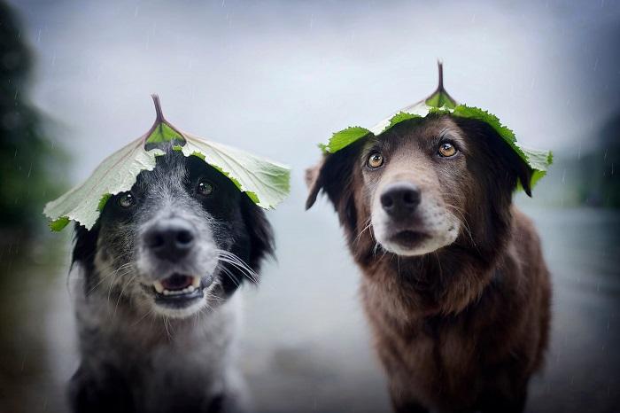 Выразительные портреты собак от фотографа Энн Гейер.