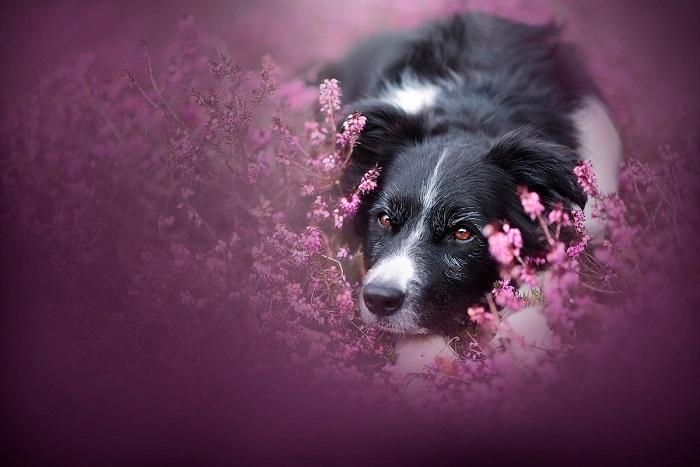 Австрийский фотограф Энн Гейер (Anne Geier) специализируется на профессиональных съемках собак.