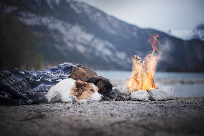 По словам Энн Гейер, в настоящее время большинство собак хорошо обучены, что значительно облегчает работу фотографа.